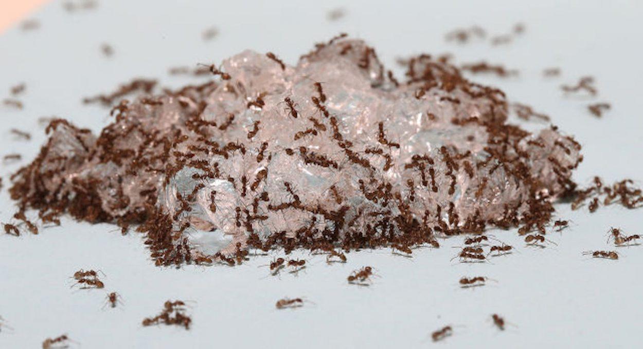 Какую отраву выбрать для муравьев 54