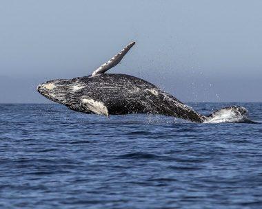 Почему киты столь велики?